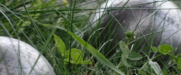 koule v trávě